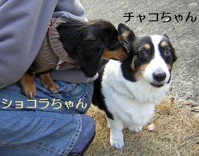 ショコラ&チャコ