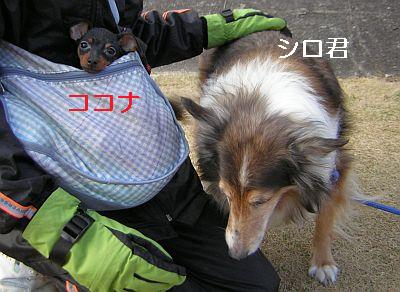 シロ&ココナ