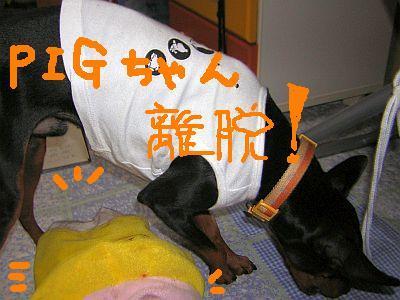 PIGちゃん離脱