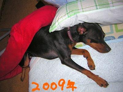 ベッドを尻に被り、枕を頭に被る