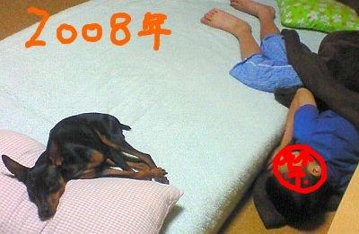 犬がベッドで人間が床・・・