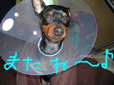 パラボラアンテナ犬
