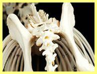 正常な骨盤内